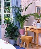 Palmen im Schlafzimmer:Chamaedorea metallica