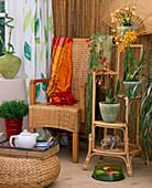 Asia-Flair mit Hoya linearis / Wachsblume, Vuylstekeara / Orchideen,
