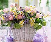 Korb mit Folie: Tulipa 'Angelique', Narcissus-Hybr.