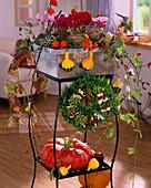 Cyclamen persicum / Mini-Alpenveilchen