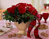 Rosa / Rosen 'Grand Prix', Ilex aquifolium / Stechpalme, Juglans regia / Walnüsse