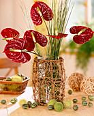 Strauß aus roten Blüten der Flamingoblume