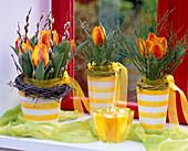 Tulipa 'Flair' / Tulpen, Salix / Weidenkätzchen,