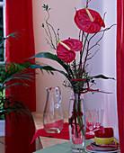 Anthurium andreanum / Große Flamingoblume,Cornus / Hartriegel,