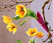 Tulipa 'Ad Rem' / Tulpen in Glasröhrchen in Papiertüten gesteckt