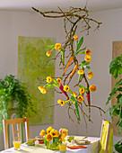 Sambucus / Holunderzweige, Tulipa 'Ad Rem' / Tulpen an der Decke aufgehängt