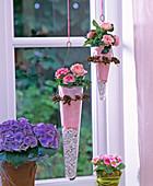 Rosa chinensis / Topfröschen in hängenden Glastöpfen,