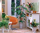 Philodendron 'Emerald Duke' / Baumfreund, Guzmania / Guzmanie,