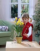 Kleines Mädchen dekoriert Narcissus / Narzisse mit Salix