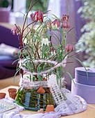 Fritillaria meleagris / Schachbrettblumen, Cornus / Hartriegel-