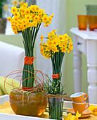 Narcissus jonquilla 'Martinette' / vielblütige Zwergnarzisse,