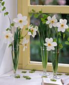 Narcissus poeticus / Dichternarzissen, Betula / Birkenzweige am