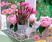 Paeonia 'Sarah Bernard' / Pfingstrosen, Salvia 'Rosenwein'