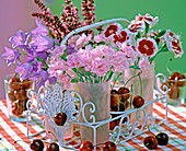 Dianthus 'Theresa', 'Alice' / Nelken, Campanula / Glockenblumen,