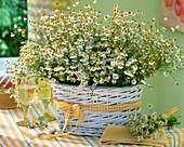 Weißer Henkelkorb mit Matricaria / Kamille, kleiner Strauß