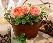 Rosa 'Abraham Darby' / Englische Duftrose, Salvia 'Icterina'/ Salbei,