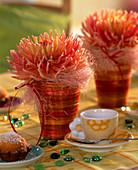 Dahlia / Kaktusdahlie mit rosa Sisal