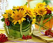 Helianthus 'Capenoch Star' / Sonnenblumen