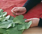 Tischläufer aus Blättern: 1/2. Aristolochia / Pfeiffenwindeblätter mit Dekonadel