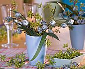 Eucalyptus globulus und citriodorus 'Esotico Nudo'