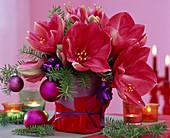 Hippeastrum / Amaryllis, Abies koreana / Koreatanne, Baumschmuck, Vase mit rotem
