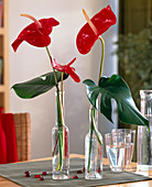 Anthurium andreanum 'Tropical' / Flamingoblumen