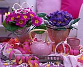 Primula acaulis (Frühlingsprimeln)