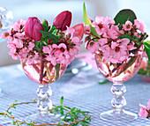 Bergenia (Bergenienblüten), Tulipa (Tulpen)