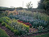 Gemüsegarten mit Petersilie, Blumenkohl,Salat,