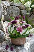 Strauss aus Allium (Zierlauch), Hydrangea (Hortensien), Achillea