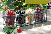 Frisch gepflueckte Beeren in Einmachglaesern aufgereiht in Flaschenträger