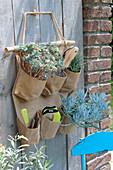Tasche für Utensilien mit Sukkulenten und kleinen Gartengeraeten