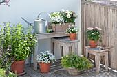 Balkon mit Kräutern und Rosen