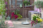 Sommerterrasse mit Petunia Sweetunia 'Suzie Storm' (Petunie),