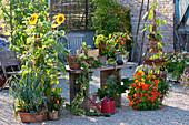 Kiesterrasse mit Sommerblumen, Gemüse und Kräutern