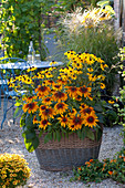 Korb bepflanzt mit Rudbeckia fulgida 'Goldsturm' , hirta 'Autumn Colors'