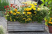 Selbstgebauter Holzkasten bepflanzt mit Sommerblumen