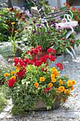 Drahtkorb bepflanzt mit Kräutern und Balkonblumen