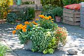 Drahtkorb bepflanzt mit Kräutern und Sommerblumen