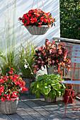 Schattenbalkon mit Begonia (Begonien), Hosta (Funkie), Impatiens