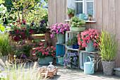 Terrasse mit selbstgebautem Regal aus Weinkisten und Palette als Sichtschutz