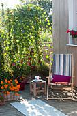 Selbstgebauter Holzkasten mit Kletterpflanzen als Sichtschutz