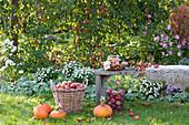 Apfelernte im Garten