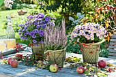 Herbstliche Tischdeko : Aster (Herbstastern), Calluna (Besenheide