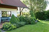 Terrassenbeet mit Alchemilla mollis (Frauenmantel), Buxus (Buchs)