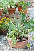 Naschterrasse mit Gemüse und Sommerblumen