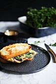 Mushroom omelette and herb toasted sandwich