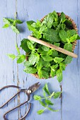 Mint in a basket on a blue wooden background