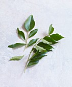 Fresh curry leaves on a white background