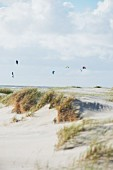 Kite surfers in St. Peter-Ording, North Sea, Schleswig-Holstein